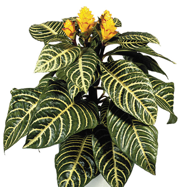 6243_49 Greenhouse Plants With Light Yellow Flowers on indoor yellow flowers, flowering trees yellow flowers, groundcover yellow flowers, drought resistant yellow flowers, bonsai yellow flowers,